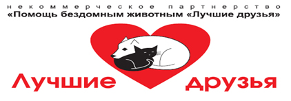 Помощь бездомным животным в Рязани