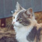 Серо-бело-рыжий кот