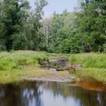 Озеро перетекающее в торфяное болото