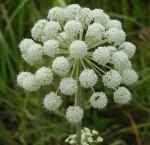 Чудо цветочек