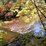 Мещерский лес, река, водопад