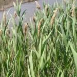 Растительный покров Рязанской области