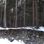 Срез почвы, хвойный лес