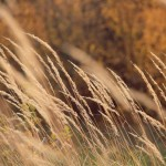 Трава на ветру