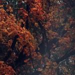 Осенние веточки деревьев
