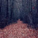 Дорога из осенних листьев