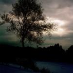 Дерево зимой