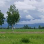 Лесостепная зона Рязанской области