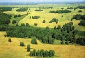 Окско-Донская провинция - лесостепь
