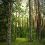 Подтаежная зона Рязанской области