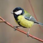 Птицы Рязанской области
